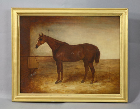 Chestnut Hunter in a Stable