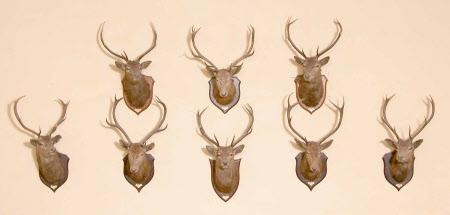 Mammal head