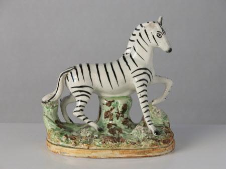 Zebra, facing right