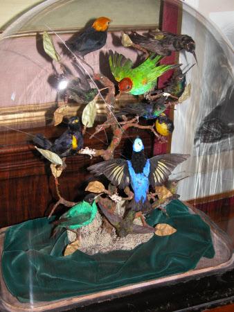 Taxidermy display
