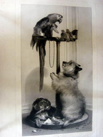 Macaw, Love Birds, Terrier and Spaniel puppy belonging to her Majesty (also called Islay and Tilco ...
