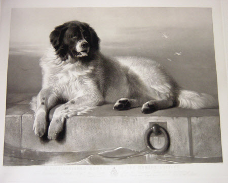 A Distinguished Member of the Humane Society (after Sir Edwin Henry Landseer)