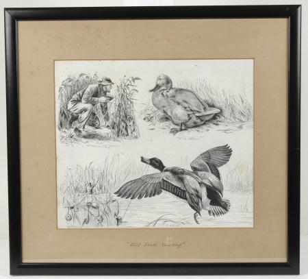 Wild Duck Snaring