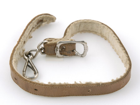 Dog collar