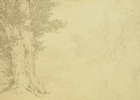 Study of an Oak Tree at Nemi