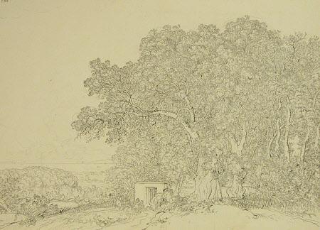 Study of Green Oak Trees on the Road from Lake Albano to Castel Gandolfo