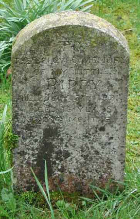 Gravestone for a pet animal called 'Rippy'
