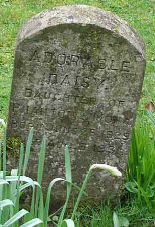 Gravestone for a pet Animal called 'Daisy'