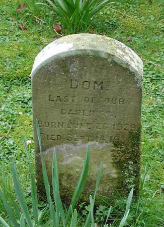 Gravestone for a pet animal called 'Dom'