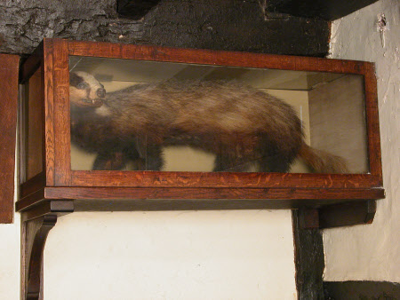 Taxidermy display case