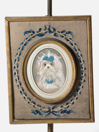 Terrier with blue ribbons
