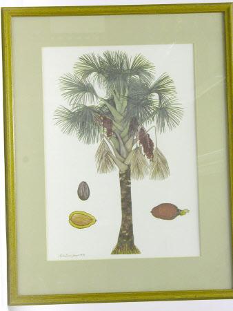 Mauritia flexuose palmae