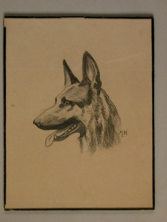 Head of a German Shepherd dog