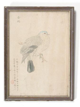 Blue headed Bird