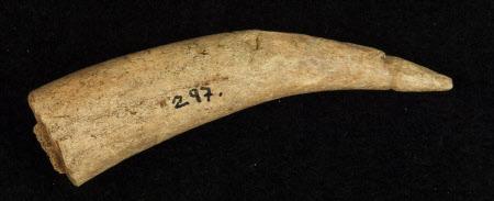 Horn fragment