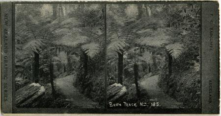 Bush Track. N.Z. 185