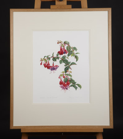 Fuchsia 'Mount Stewart'