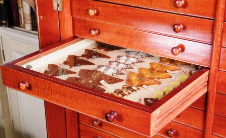 Specimen drawer