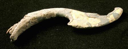 Dragon tail fragment