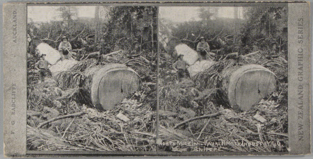 """North Auckland Kauki Timber Industry - """"Snipers"""""""