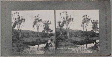 Cabbabe Tree Swamp