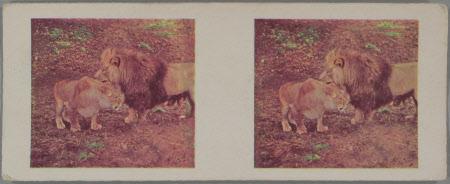 (18) Lion