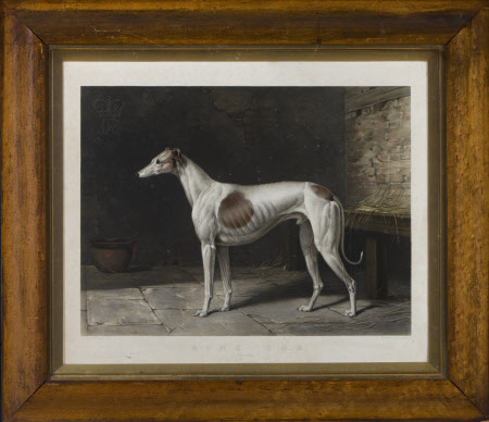 A Greyhound called ' King Cob' (after William Barraud)