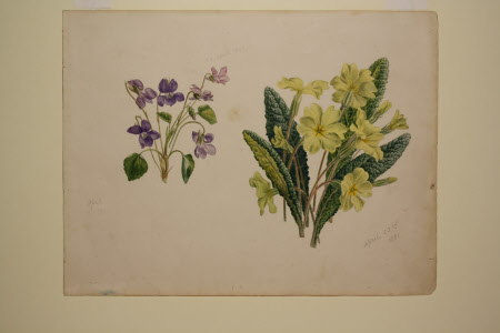 Violets and primroses