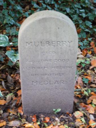 Mulberry & Medlar
