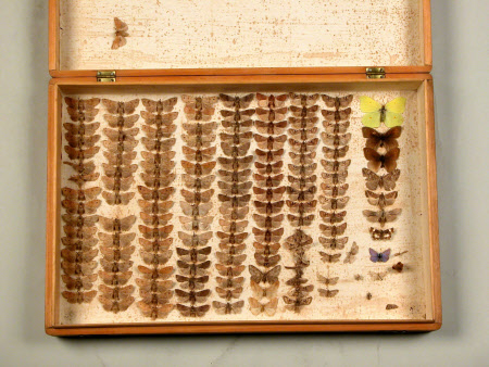 Insect specimen box