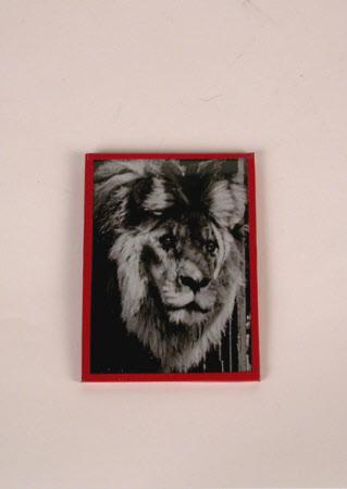 Rota the lion cub
