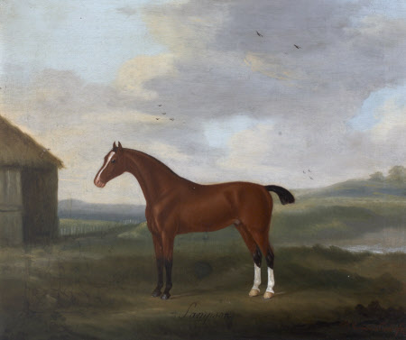 'Sampson', a Bay Horse, with two white socks