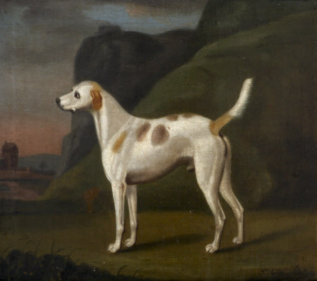 A White Dog with Brown Spots