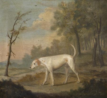 'Billy', a White Hound