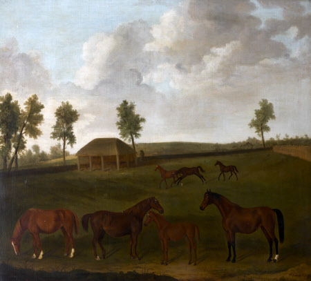 Mares and Foals in Field
