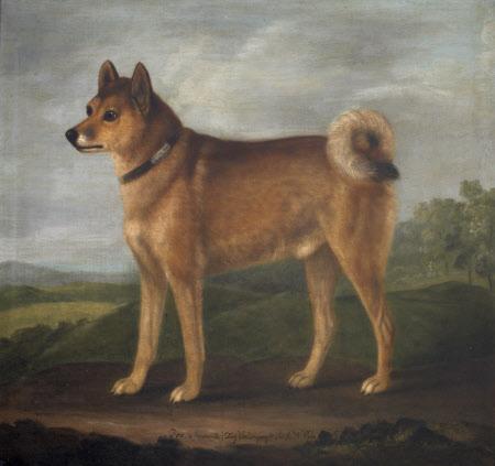 'Fox', a Favourite Dog of Sir John William Pole, 6th Bt (1757 - 1799)