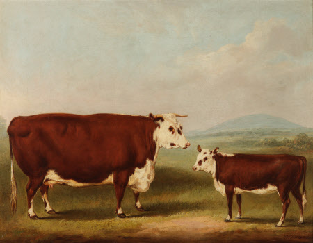 Prize Cow and Calf