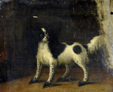 A Black and White King Charles Spaniel
