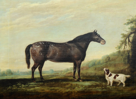 'Mouse' a Grey Pony and a Spaniel in a Landscape