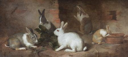 Rabbits Feeding