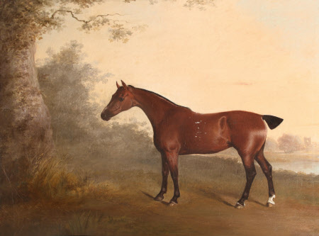 A Chestnut Hunter, known as 'The Old Chestnut', with Chastleton House in the Distance