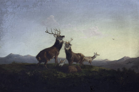A Pair of Highland Stags rutting