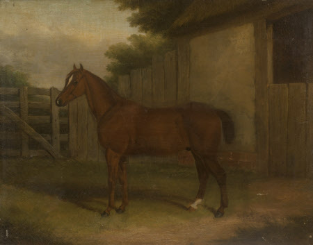 A Bay Hunter in a Paddock in front of a Stable