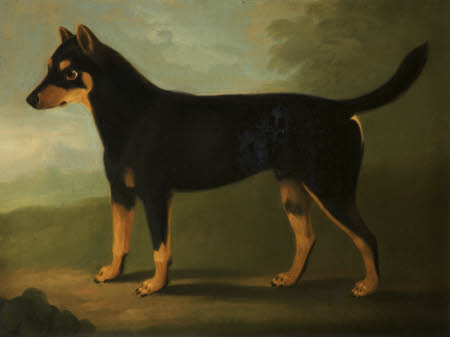 A Dog with Dark-brown and Pale-brown Markings with a Mask-like Marking on its Face in a Landscape