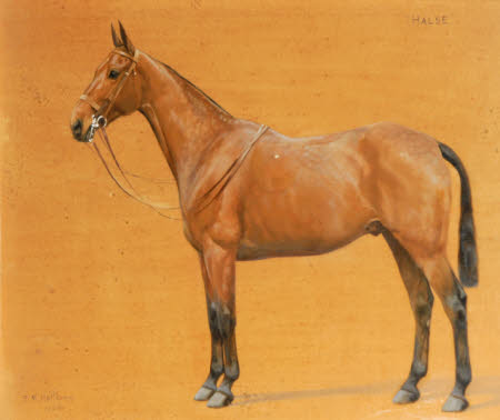 'Halse', a Chestnut Hunter