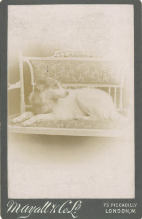 Dog on a bench