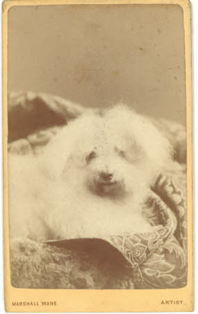 A white fluffy dog