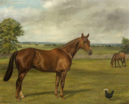 'Willie Wagtail' and 'Arch Guard', Horses in a Field