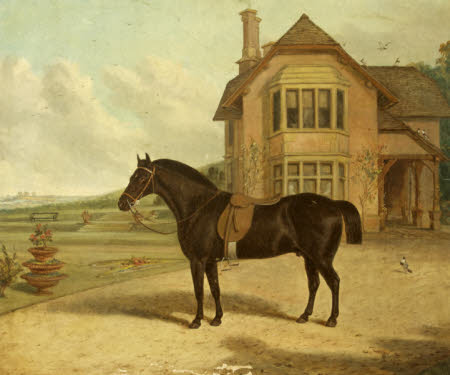 A Bay Roan in front of a House