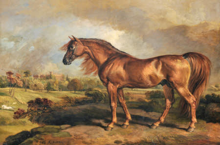A Chestnut Stallion in the Grounds of Powis Castle